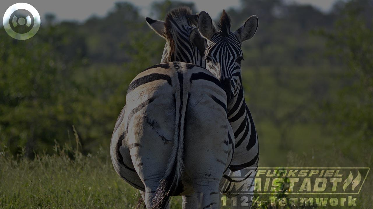 Operation Gurke. Zebra. Slide 4